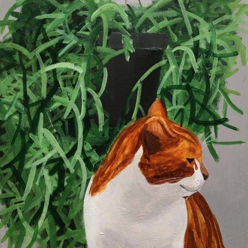 'Ginger Cat'